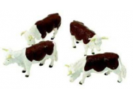 Vaches Hereford - BRIT40964